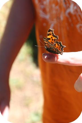 ButterflyLucas